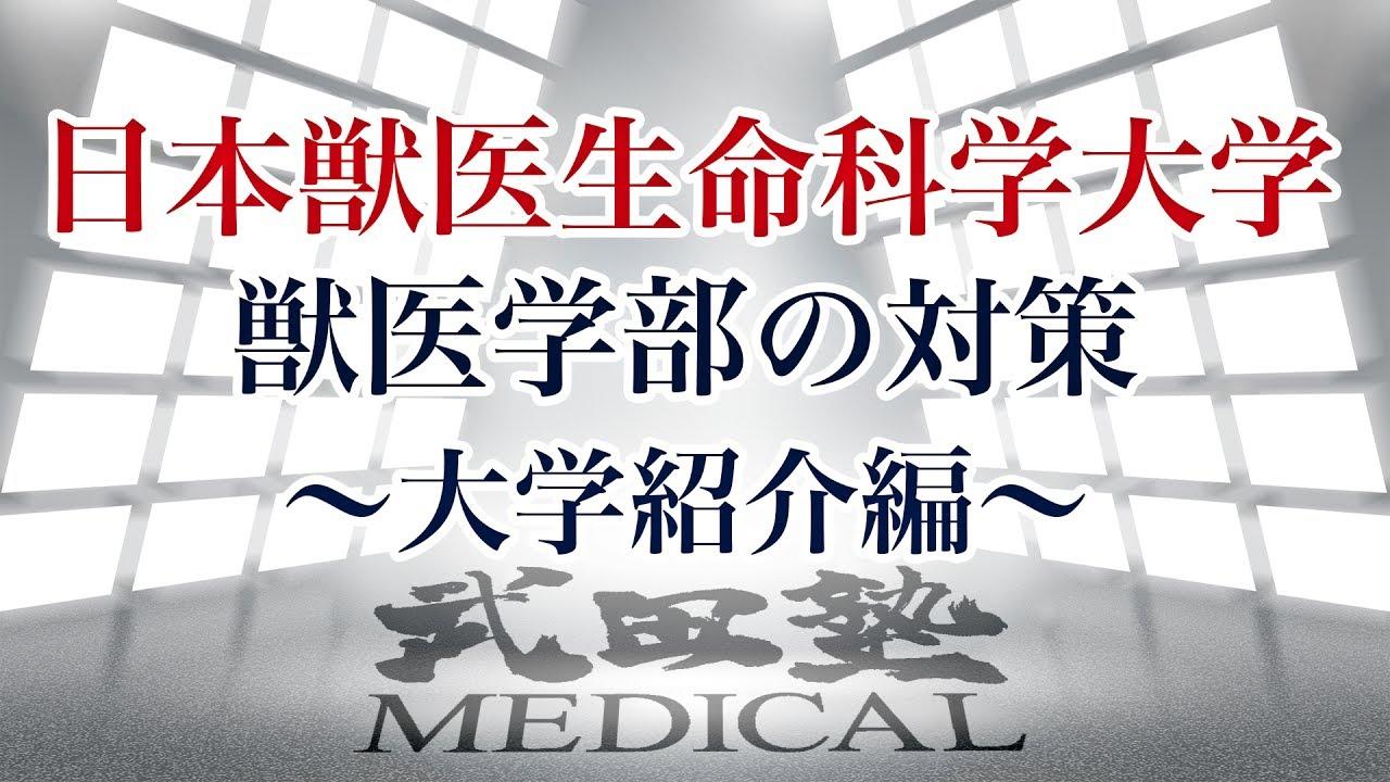 【医学部受験対策!!】日本獣医生命科学大学獣医学部の対策〜大学紹介編〜