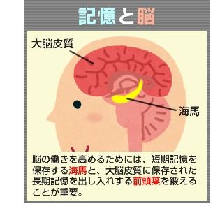 brain-img-03