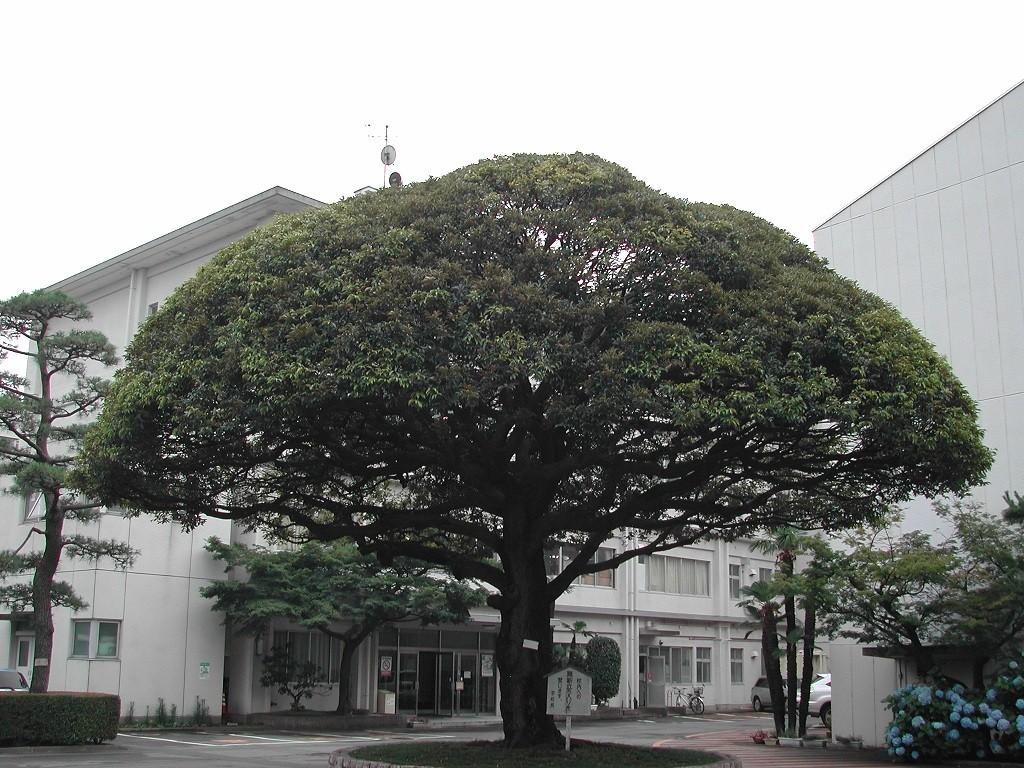 清明高校 画像