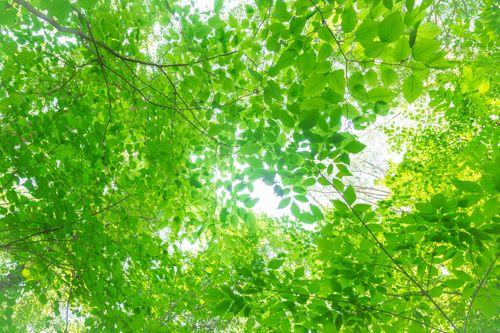 夏の木漏れ日