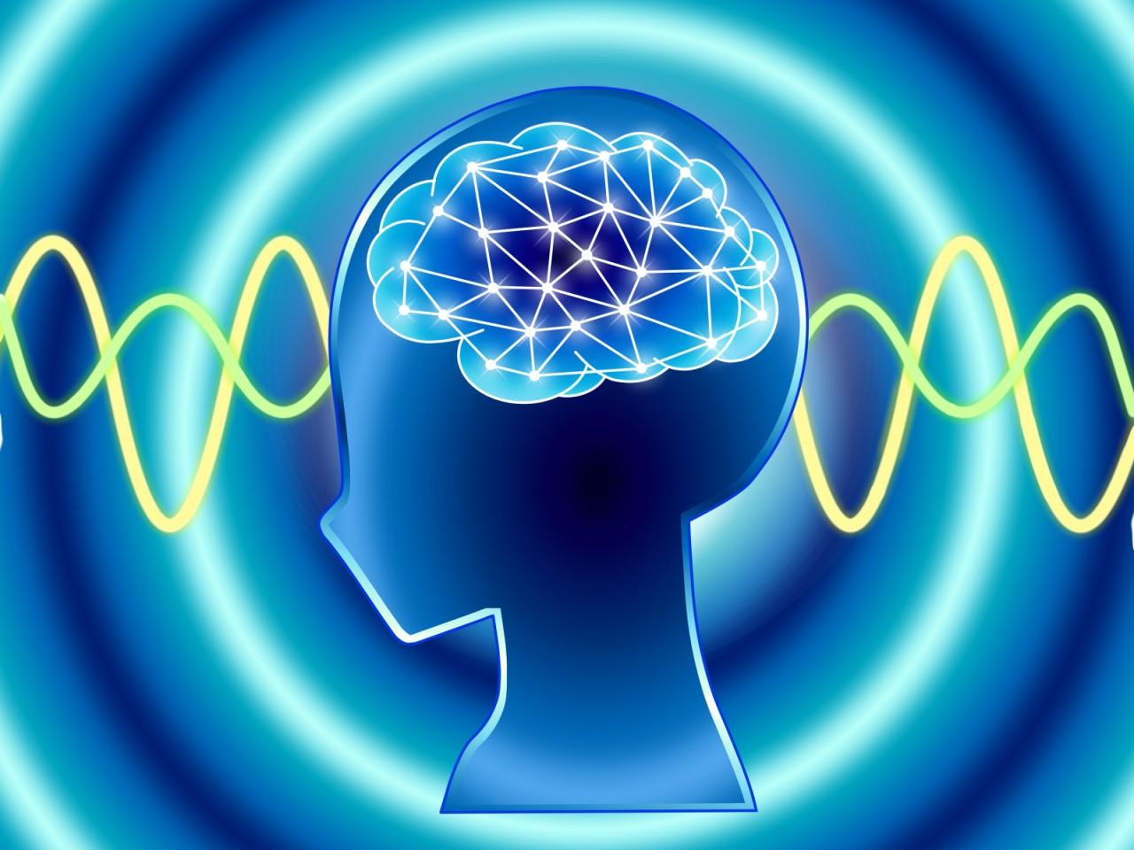 関西で神経科学を学べるおススメ大学