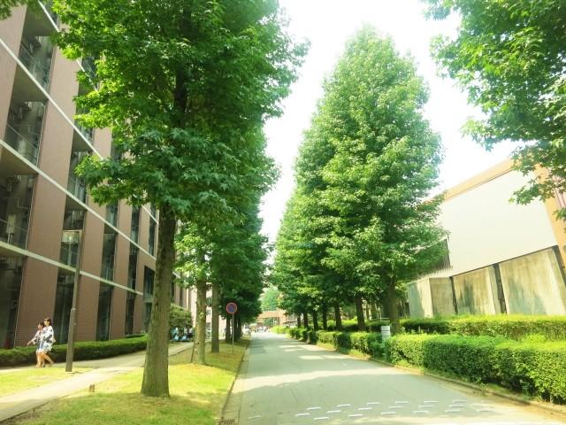 キャンパスの並木道