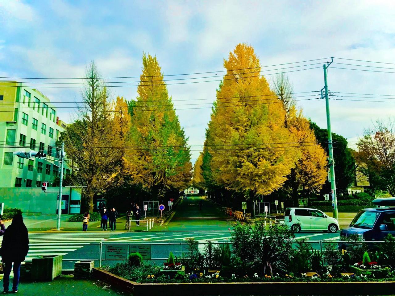 慶應義塾大学の穴場学部