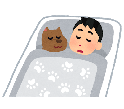 pet_inu_sleep