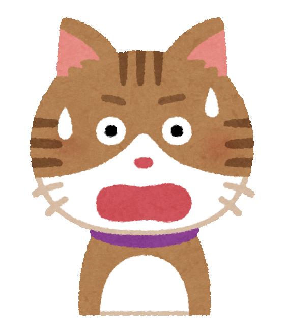 焦っている猫