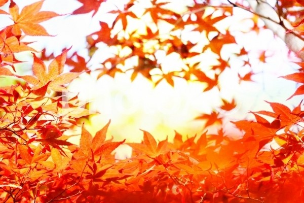 秋の受験相談イベント
