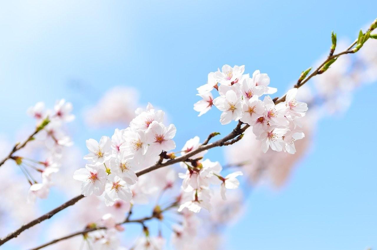 spring-2218771_1280