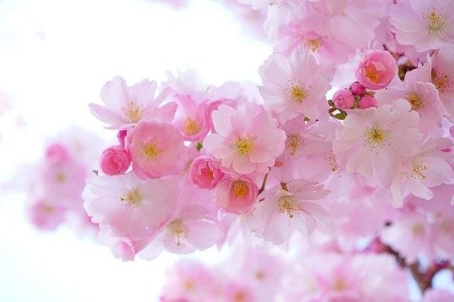 flowers-324175_640