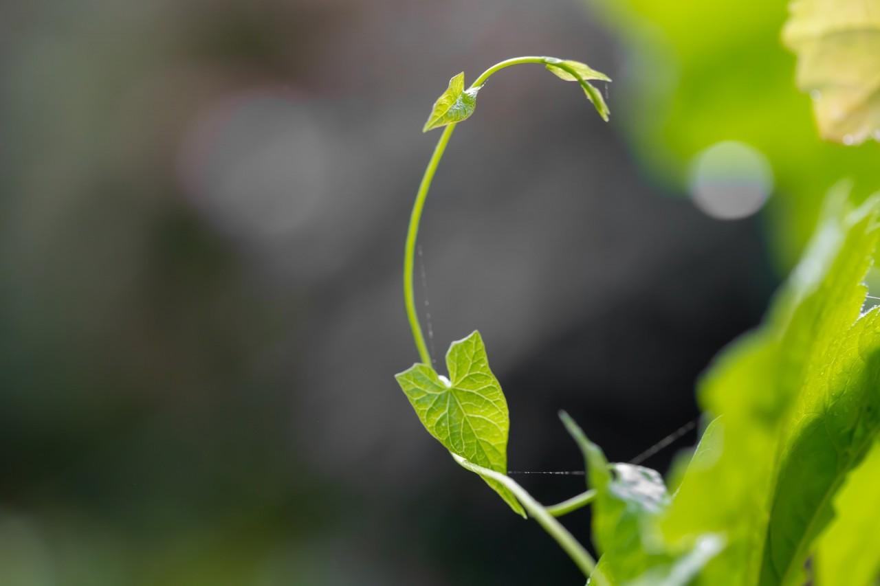 leaf-4488412_1920