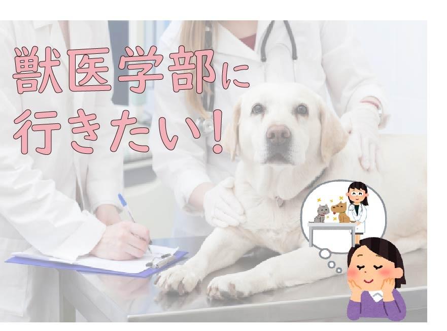 獣医学部に行きたい!