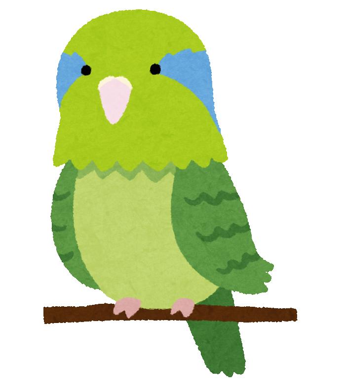 bird_mameruriha_inko_green