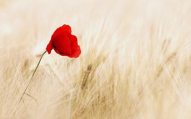 flower-100263_640