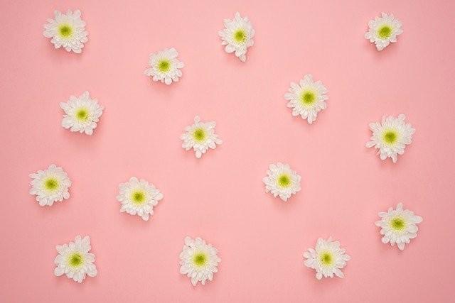 flowers-3435886_640
