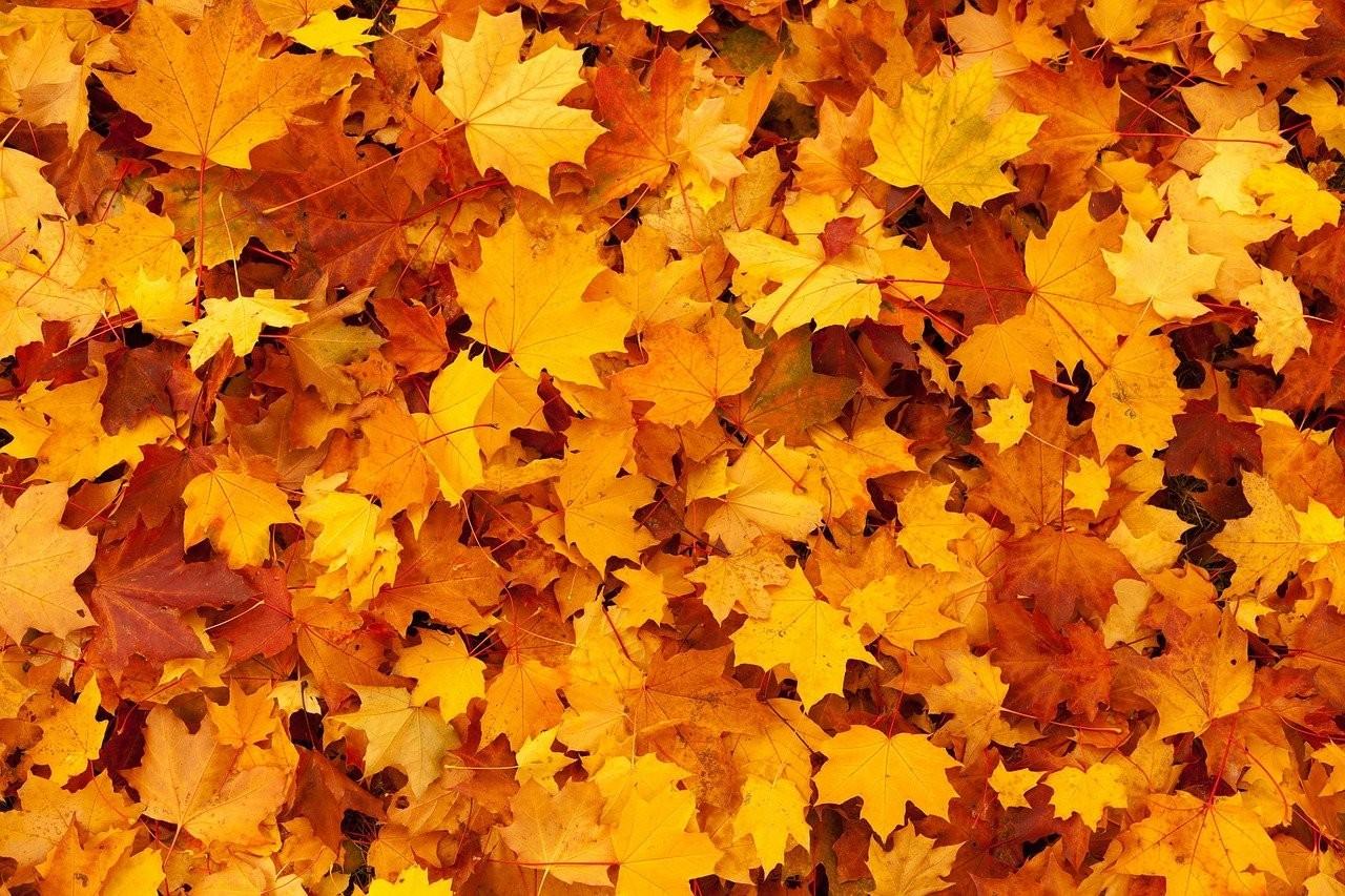autumn-g079ac9f53_1280